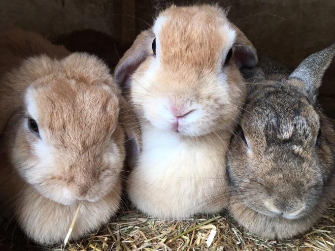 ウサギに癒される